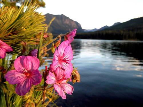 Flowerlake