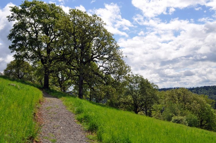 The While Oak Savanna in West Linn, OR